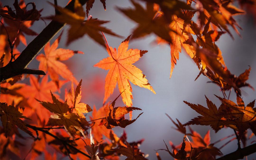 Congés d'automne